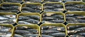 87118_sardines-une